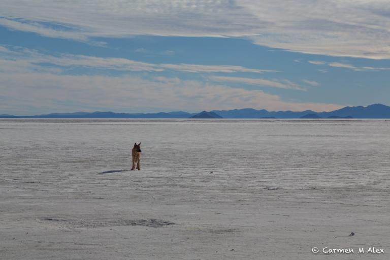 7-Bolivia-SalarDeUyuni-CarmenMAlex-2015-1629